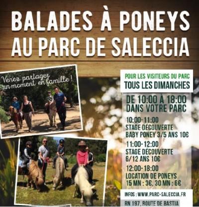 Balades à Poneys - Parc de Saleccia - Monticello - Balagne